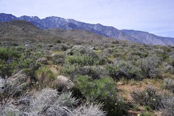 blog 12 395S near Olanch, Sage Flats Drive, CA_DSC2559-4.6.16.(2).jpg