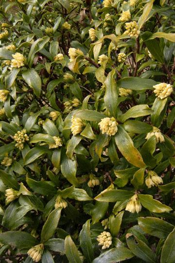 blog CP10 Garden flowers, Chinchoge_DSCN4104-3.9.17.jpg