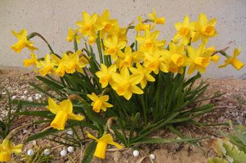 blog CP10 Garden flowers_DSCN4097-3.9.17.jpg