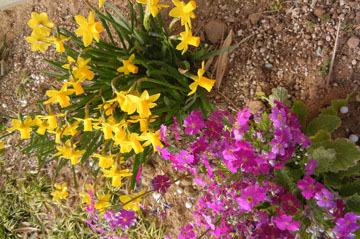 blog CP10 Garden flowers_DSCN409-3.9.17.jpg