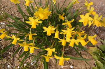 blog CP10 Garden flowers_DSCN40-3.9.17.jpg