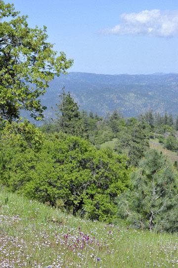 blog 27 130E Mt. Hamilton to Patterson, Lupine, Gilia & Owl's Clover_DSC6268-4.13.16.(2).jpg