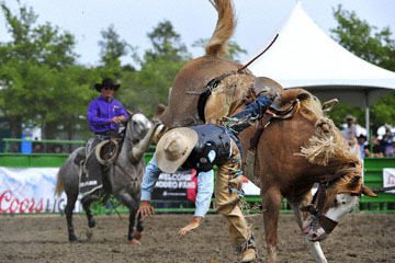 blog (6x4@300) Yoko 119 Livermore Rodeo, Saddle Bronco 6, Jacob Phillips (NS Vista, CA) 2_DSC7330-6.11.16.(4).jpg