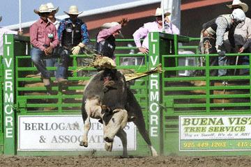 blog (6x4@300) Yoko 122 Livermore Rodeo, Bull Riding, Dustin Marberry (79.5 Porterville, CA) 2_DSC7921-6.11.16.(7).jpg