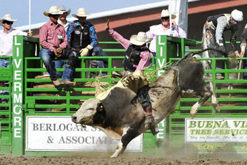 blog (6x4@300) Yoko 122 Livermore Rodeo, Bull Riding, Dustin Marberry (79.5 Porterville, CA) 2_DSC7916-6.11.16.(7).jpg