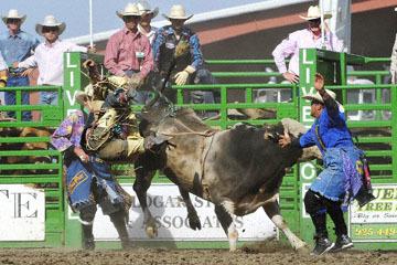 blog (6x4@300) Yoko 122 Livermore Rodeo, Bull Riding, Dustin Marberry (79.5 Porterville, CA) 2_DSC7936-6.11.16.(7).jpg