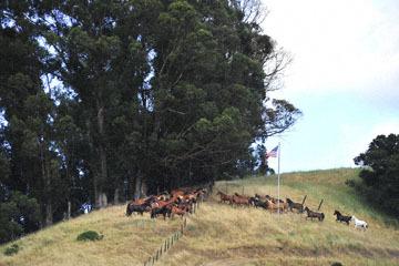 blog (6x4@300) Yoko 79 Rowell Ranch Rodeo, Flag, CA_DSC8645-5.20.16.(5).jpg