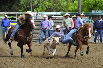 blog (6x4@300) Yoko 76 Rowell Ranch Rodeo, Slack, Steer Wrestling, Blain Jones ? (10.9), Hazer-Josh Garner_DSC8125-5.20.16.(2).jpg