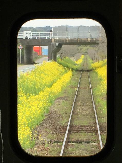 ブログ花旅行12