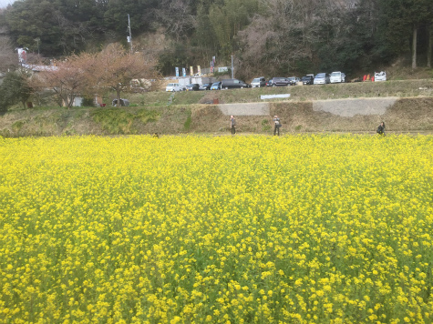 ブログ花旅行14