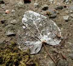 落ち葉の化石?