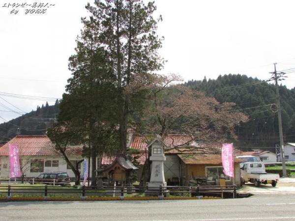 0757新庄村がいせん桜祭り170415