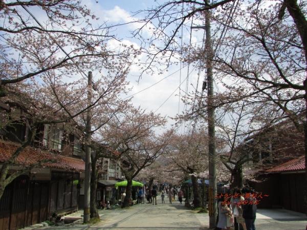 0763がいせん桜 咲き始め170415