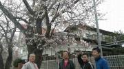 富岡の桜-7
