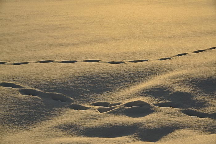 雪原・模様2