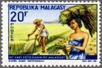 マダガスカル・稲作
