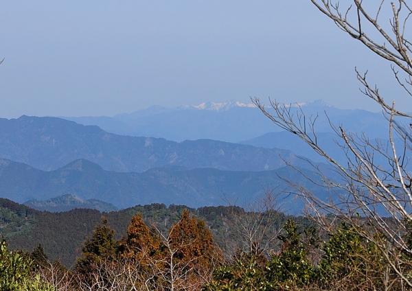 5雪割桜17.03.05