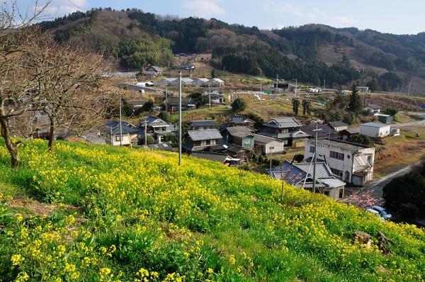 1黄色い丘17.03.14