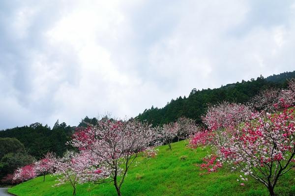 8仁淀川沿い17.04.06