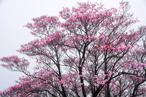 1篠山17.04.25