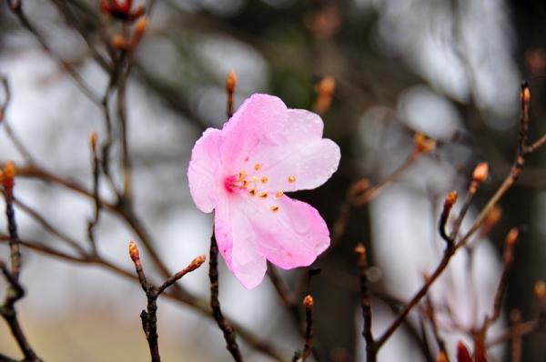 3篠山17.04.25