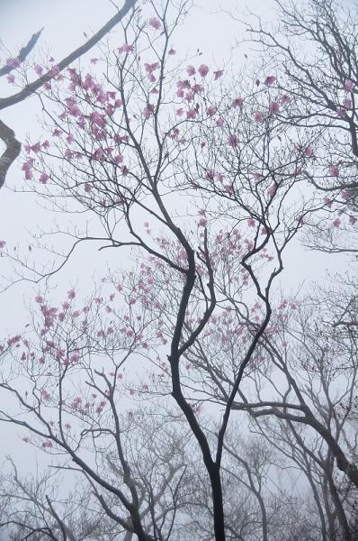 5篠山17.04.25