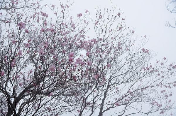 10篠山17.04.25