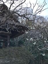 東慶寺_梅1
