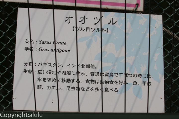 和歌山公園 オオヅル