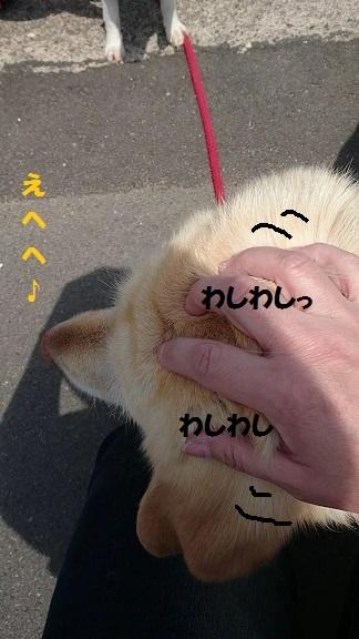 MOV_0063_000011.jpg