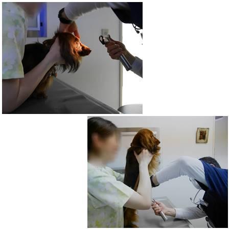 20170418-6.jpg