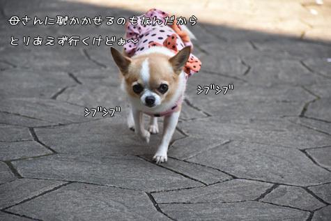 DSC09220414.jpg