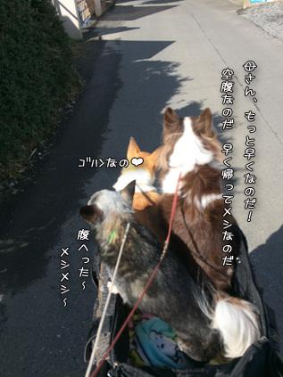 IMG82190217.jpg