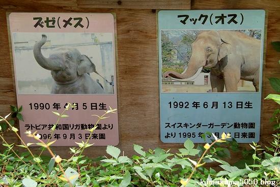 王子動物園_19