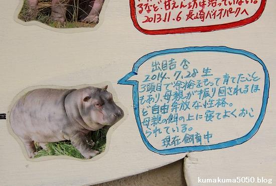 王子動物園_22
