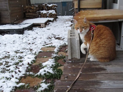 雪ですよ(@_@)