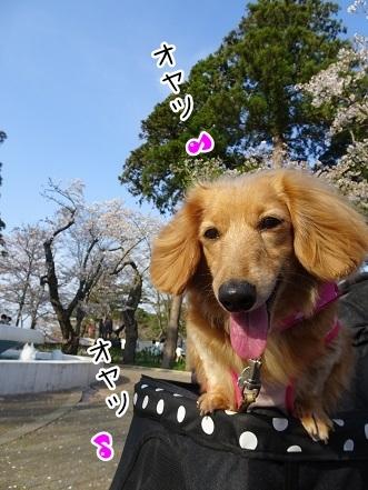 kinako7324.jpg