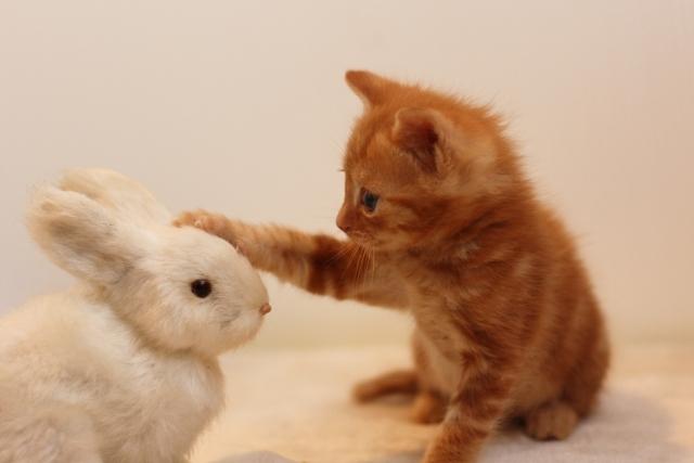 子うさぎと子猫