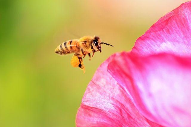 【食物連鎖】人類はあと「4年」で滅んでしまうかもしれない…絶滅危機にあるミツバチを救え!