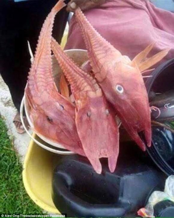 【生物】漁師たちもビックリ!「エビと魚」が合体したようなこの生物の正体とは?