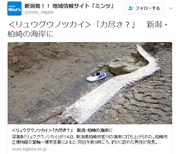 【前触れ】新潟県柏崎の海岸で深海魚の「リュウグウノツカイ」が打ち上げられているのが見つかる!