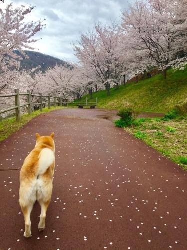 矢木羽湖3