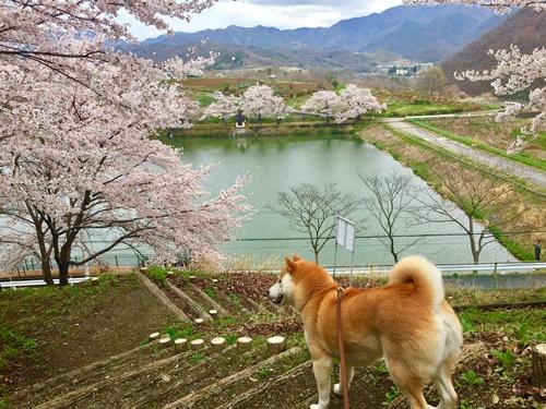 矢木羽湖9