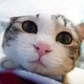 ฅ(ↀᴥↀ)ฅ 猫に九生